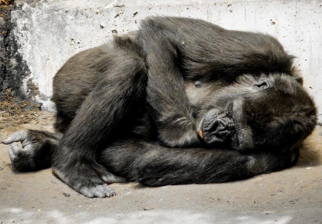 monkey-772558_1280